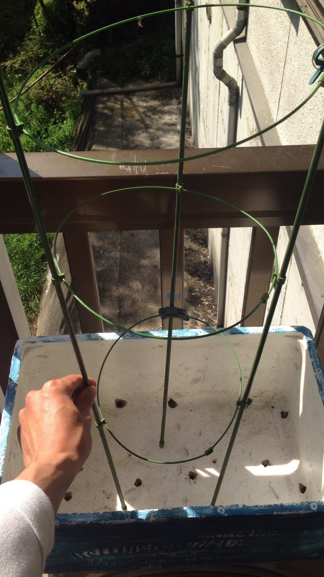 ベランダ栽培 ミニトマト 支柱